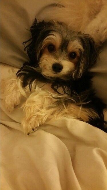 Twinkle's bedtime