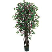 Flowering Silk Trees, Bougainvillea & Dogwood Silk Tree