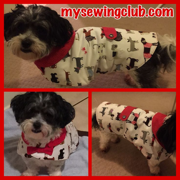 Sharon has been busy sewing for her baby. Oh my this coat is sooooo cute. Any dog would be proud to wear it, and don't you just love the fabric. Cheers Fee, mysewingclub.com