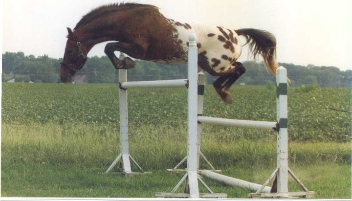 how to train horse to jump higher