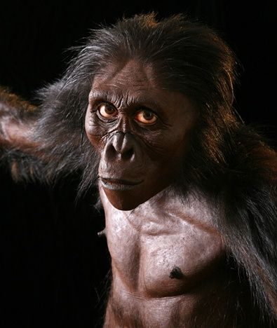 Australopithecus afarensis is an extinct hominid that lived between 3.9 and 2.9 million years ago. The most famous fossil is the partial skeleton named Lucy (3.2 million years old) found by Donald Johanson and colleagues.
