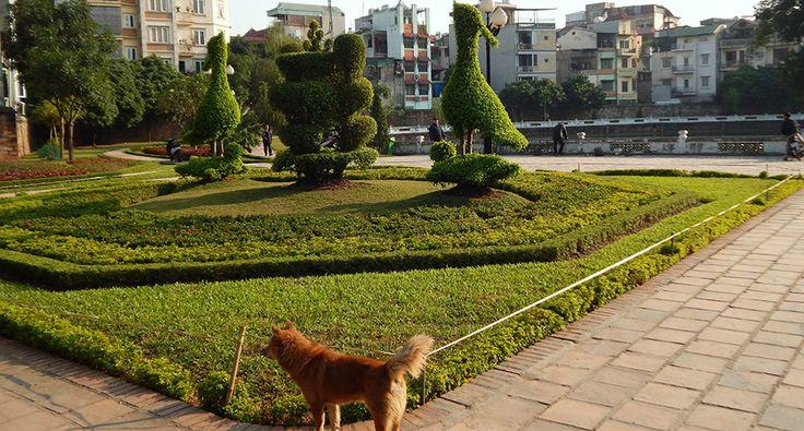 Hanoi, at the Temple of literature. #hanoi #vietnam #dog #travel #wander