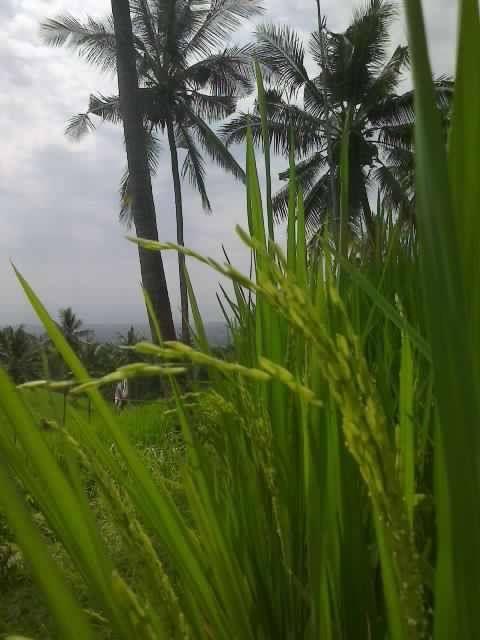 Bali, Buleleng - Panji : Amazing! ^_^
