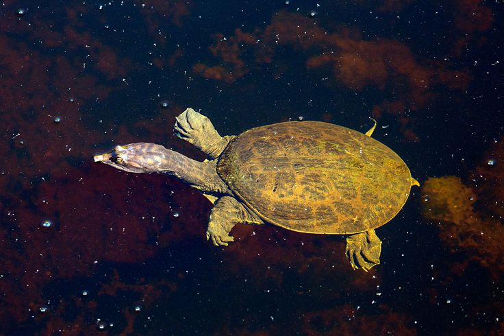 Canadian Seafood Supplier Smuggled Florida Turtles