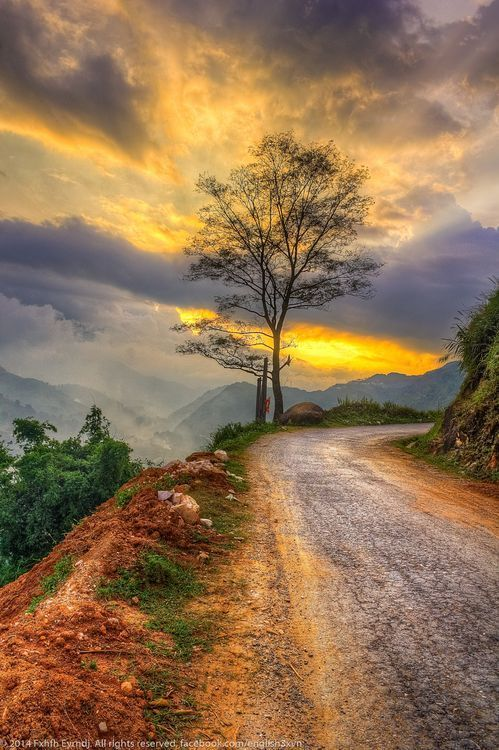 Lone tree on road (Sapa, Vietnam) by Fxhfh Eyrndj cr.c.
