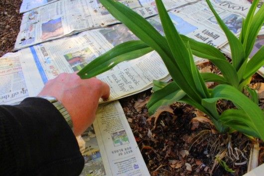 Use newspaper to get rid of weeds in flower beds.