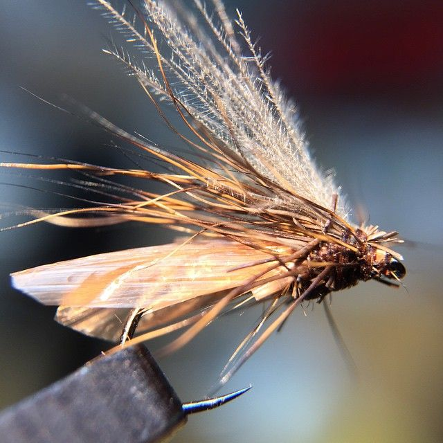 709 best fly tying realistic flies images on pinterest for Fly fishing competitions