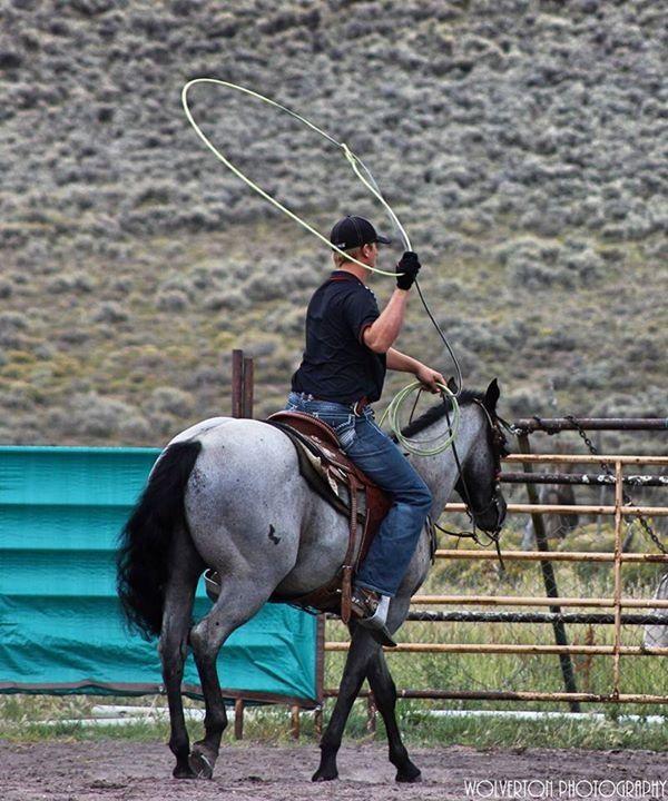 Team roping dating sites-in-Cavae