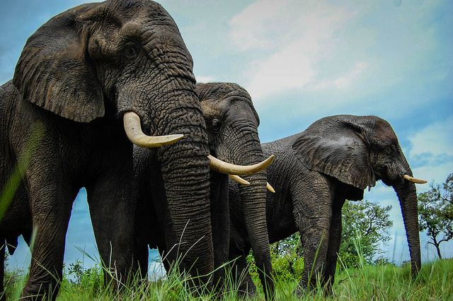 elephant-safari-botswana