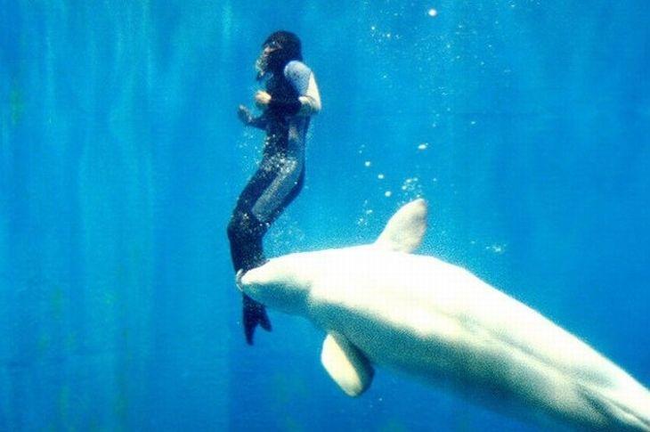touching-animal-stories