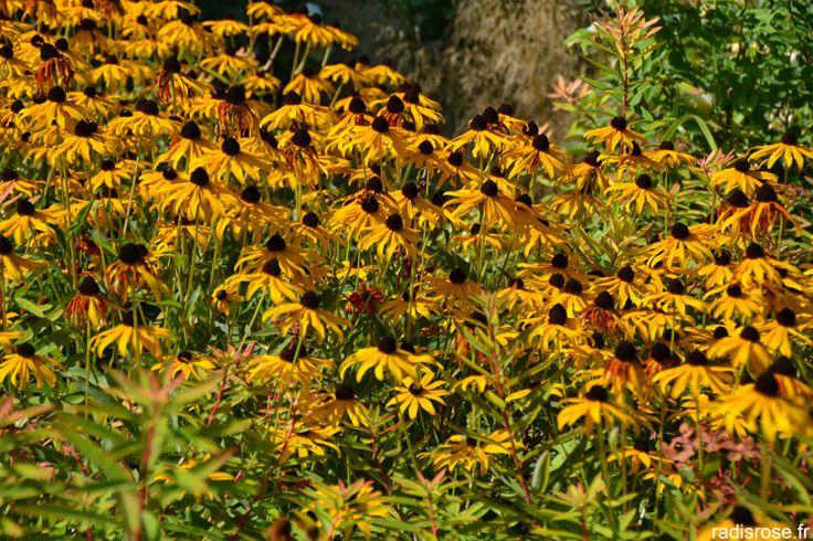 Le château du Rivau, situé près de Chinon, fait partie des châteaux de la loire. On y visite un château médiéval, le potager de Gargantua, classé conservatoire des anciennes variétés de légumesde la Centre, et de très jolis jardins classés jardin remarquable par radis rose. http://radisrose.fr/le-chateau-du-rivau-et-le-potager-de-gargantua/ #jardin #chateau #france