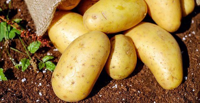 Kartoffel-Anbau auf Balkon und Terrasse - GartenMagazine.de