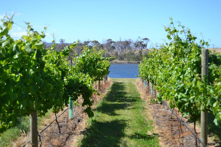 The vines running down to Lisdillon Rivulet