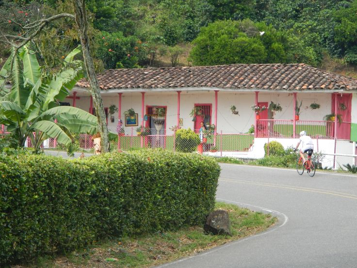 A photo only possible in the Coffee Region of Colombia. A typical coffee farm house surrounded by coffee fields and plantane trees.