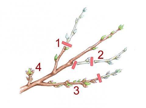 16 best zimmerpflanzen images on pinterest house plants. Black Bedroom Furniture Sets. Home Design Ideas