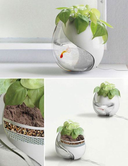 creative small fish tank | Top Creative Works » Nontraditional fish tank