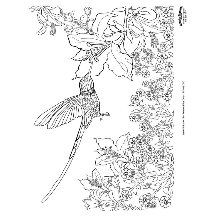 Coloring Pages For Adults Hummingbird : Hummingbird adult coloring page free printable