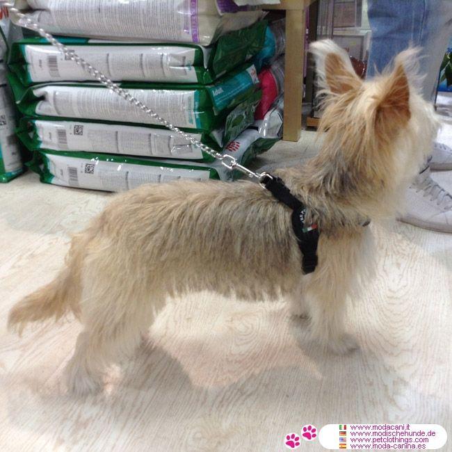Pettorina Nera per Cane Piccolo regolabile sotto la Pancia #ModaCani - Pettorina Nera Made in Italy per un cane piccolo o medio molto pratica: in soli 2 minuti il tuo cane è pronto per uscire a fare una passeggiata!
