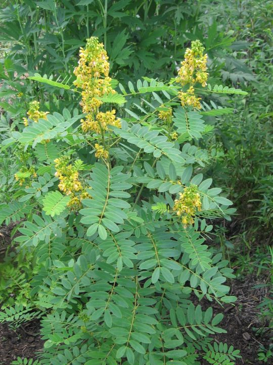 64 best new jersey native plants images on pinterest