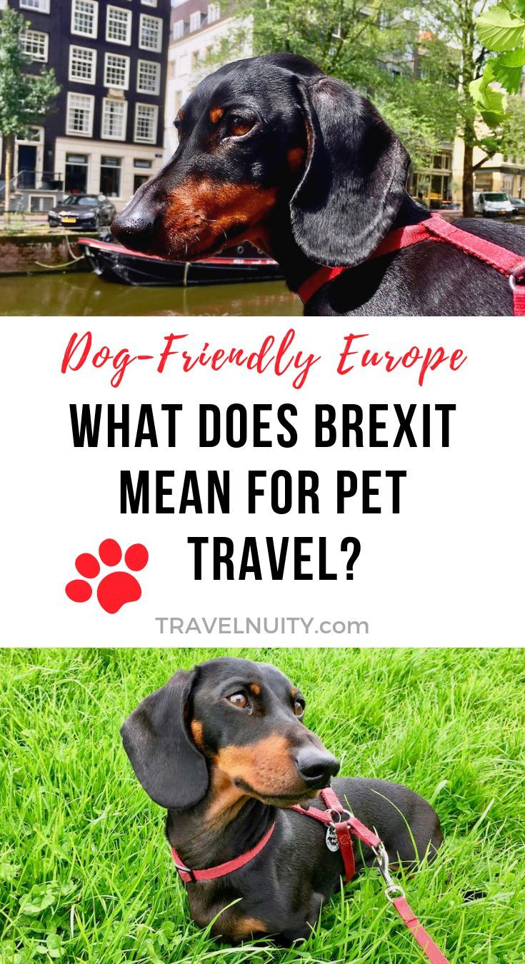 What Does Brexit Mean For Pet Travel Pet Travel Travel Tips