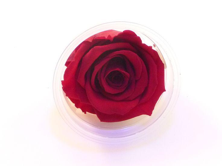 rose éternelle de couleur Rouge, parfait pour une décoration florale de longue durée.