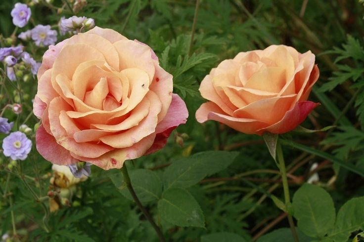 Zobacz Watek Niecierpliwie Czekam Na Wiosne Cz 29 Plants Flowers Rose