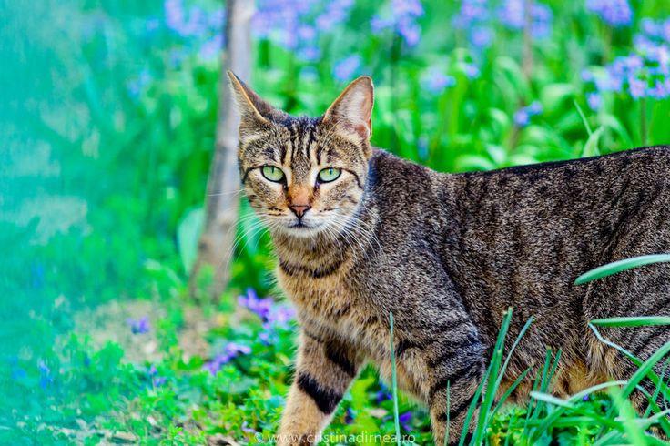 the cat by TheNightShrew.deviantart.com on @deviantART