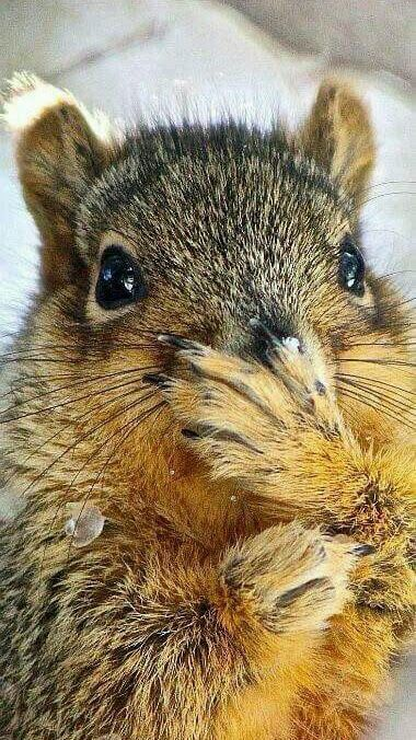 """""""The human that lives in the big house by my favorite tree??? I saw HIS NUTS!!!"""""""