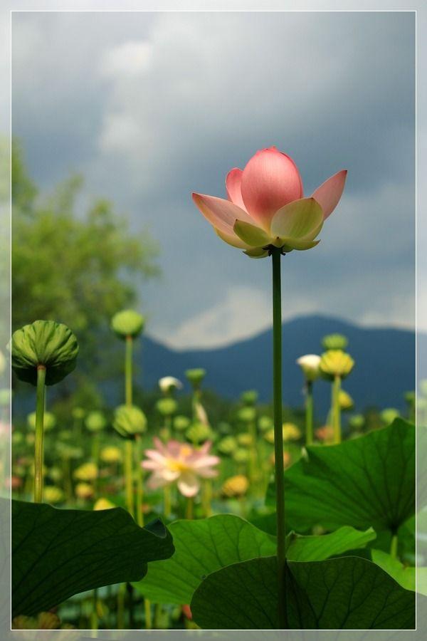 Korean Garden Inspirations References Pinterest