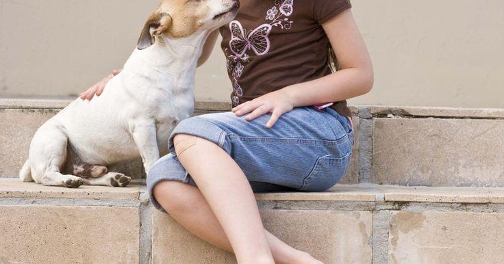 Cómo preparar una dieta para un perro con problemas hepáticos. Si tu mascota está sufriendo de falta de apetito, vómitos, diarrea y aletargamiento, podría estar transitando por una enfermedad del hígado. Hay varias causas que la provocan, entre ellas las toxinas, las infecciones y hasta existen razones genéticas. Pero hay algo que puedes hacer. La dieta es muy importante si tu mascota tiene una afección ...