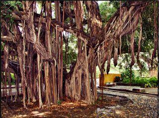 Jardín Botánico Quinta de San Pedro Alejandrino
