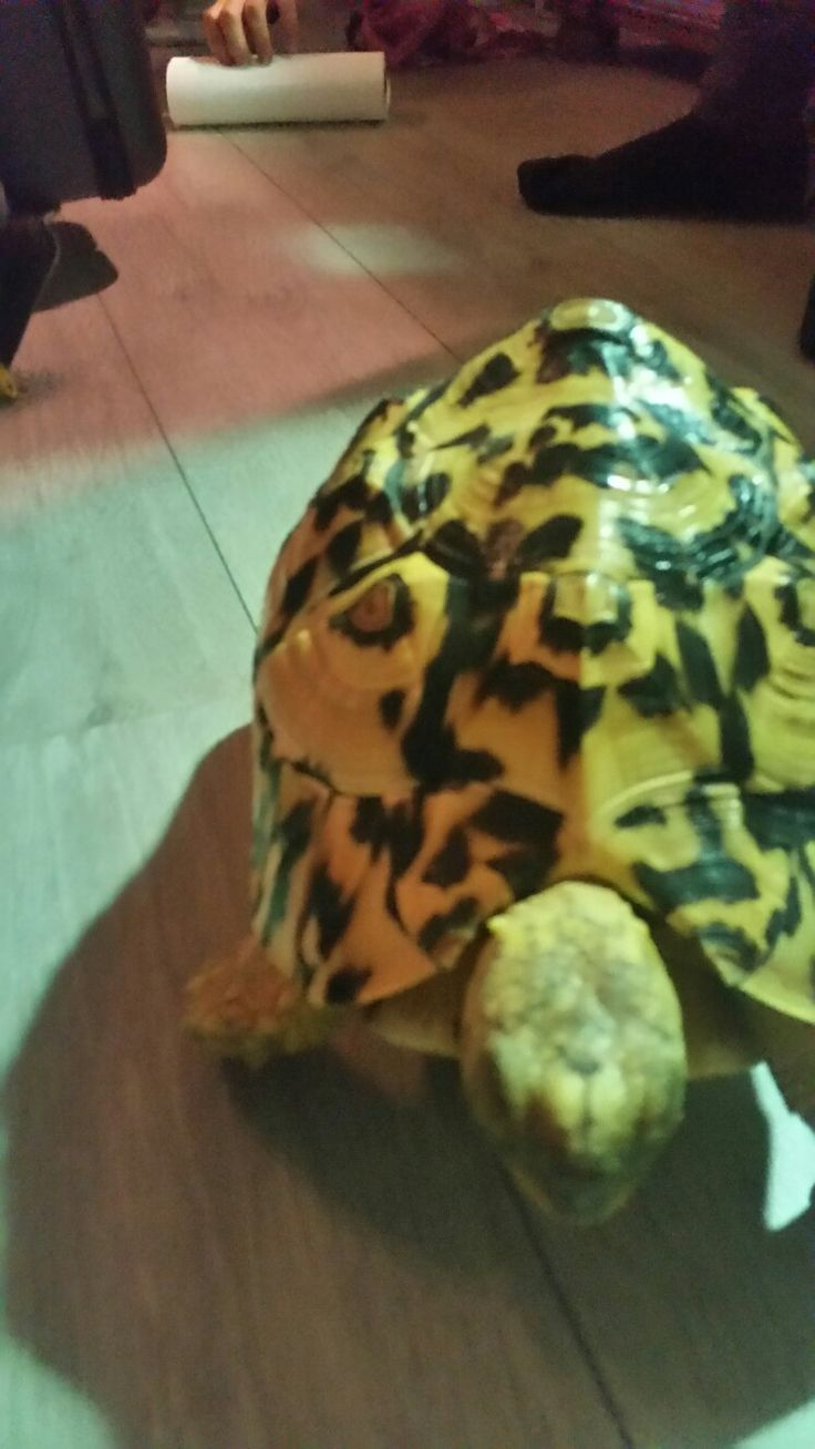 Hallo wat doe je daar #schildpad #turtle