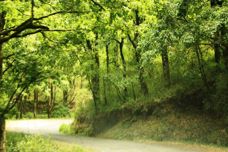 #Woods #Uttrakhand #Mukteshwar #Green