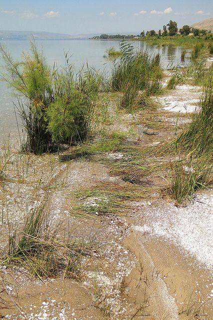 Holy Walks: Shore of Lake Kinnaret (Sea of Galilee) - Israel
