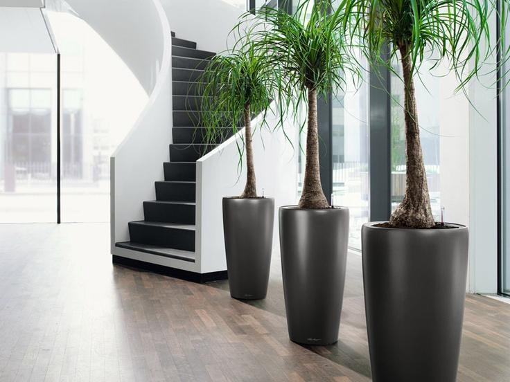 Rondo Plant Containers. Best Indoor ...