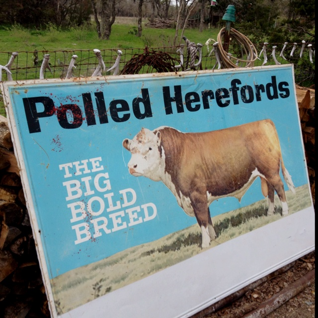 Vintage Hereford Things I Like Mini Cows Hereford