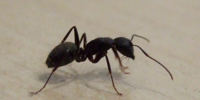 How To Get Rid Of Ants In Your Bathroom 2019 Review With Images