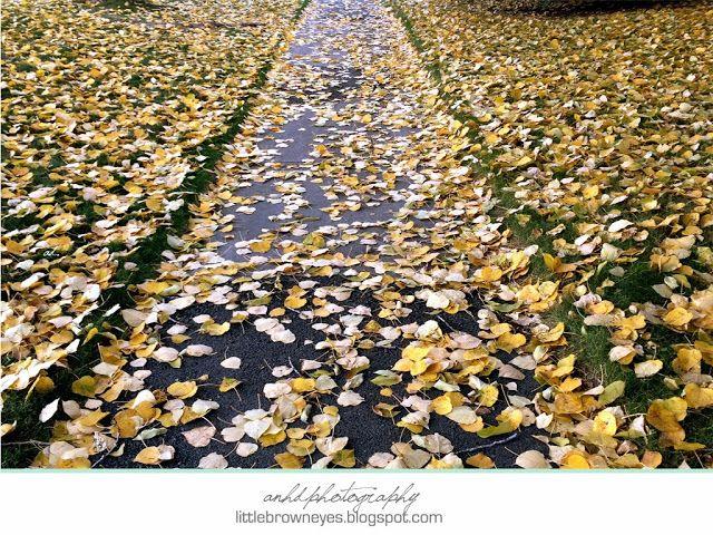 Anh's Photography: Calgary Fall (II)
