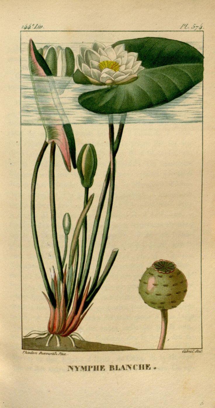 ct. 8 - Flore médicale des Antilles, ou, Traité des plantes usuelles : - Biodiversity Heritage Library
