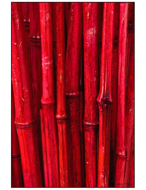 Red Bamboo, via Flickr.