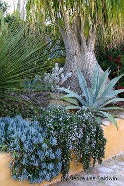 Succulent Gardens eclectic landscape