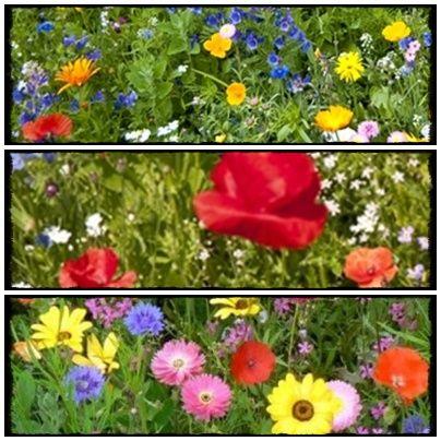 Spokojny Dom - blog o rodzinie, roslinach i moich wartościach.: Jakie rośliny przyciągną motyle do naszego ogrodu? Jak wzbogacić naszą faunę w ogrodzie.  grass, flowers, garden, seeds