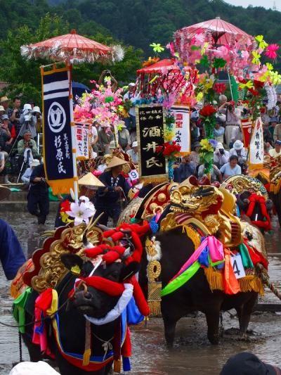 Hanadaue Event of Mibu (rice planting event) #japan #hirosima Intangible Cultural Heritage 【壬生の花田植】北広島町 ユネスコ無形文化遺産