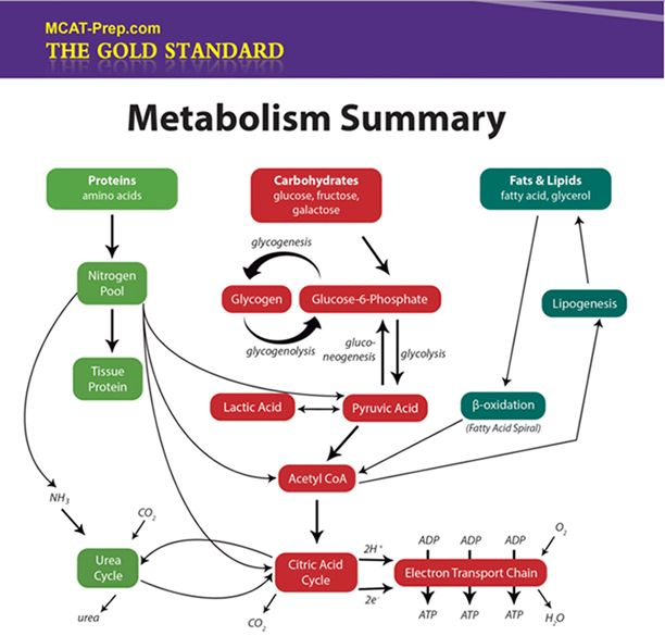This MCAT Biochemistry Review Summary website is a helpful guide in your MCAT prep