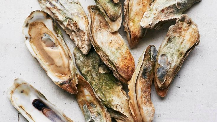 Why The Southeast Could Become The Napa Valley Of Oysters : The Salt : NPR