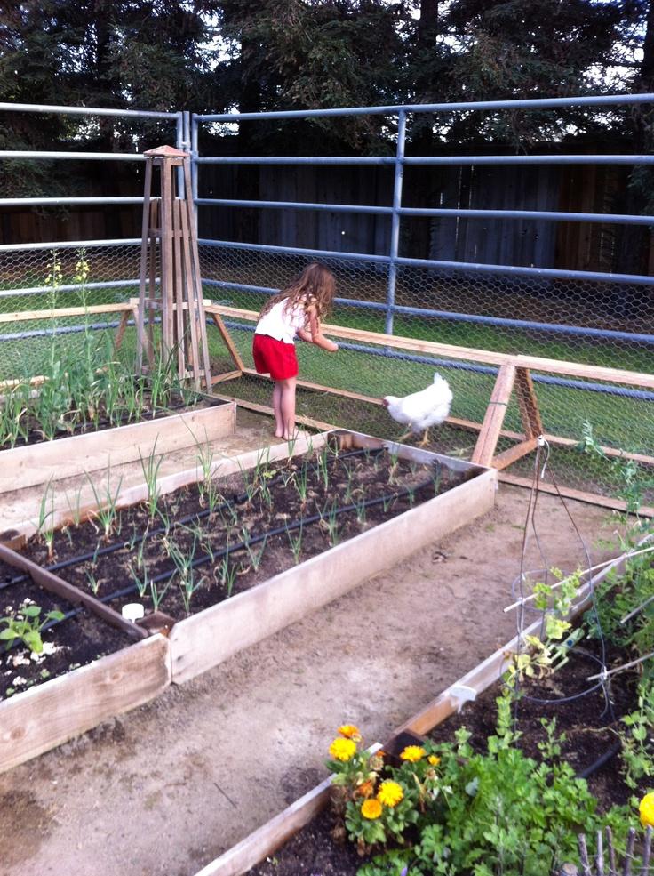 chicken tunnel around garden  www.calituckyfarm.com