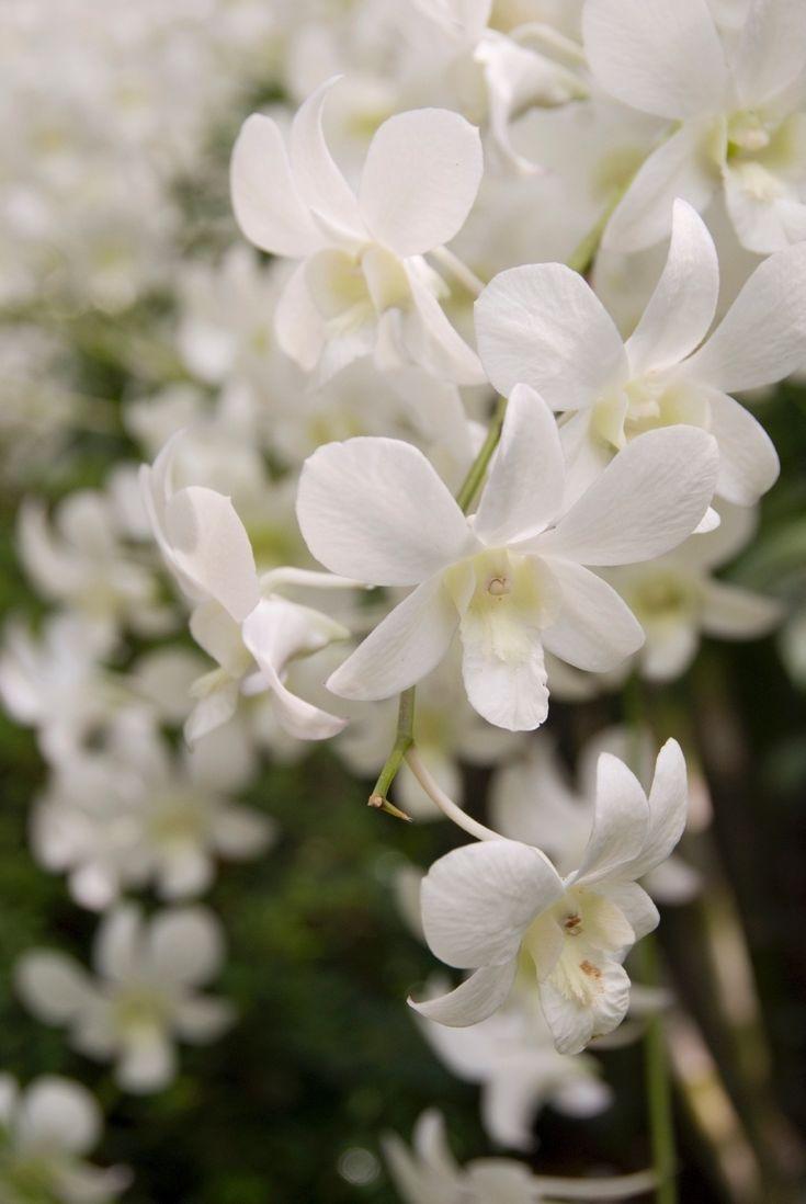 M s de 25 ideas incre bles sobre flores baratas en for Plantas baratas