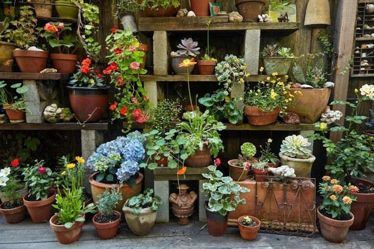 Best 25 garden shelves ideas on pinterest plant shed for Cinder block plant shelf