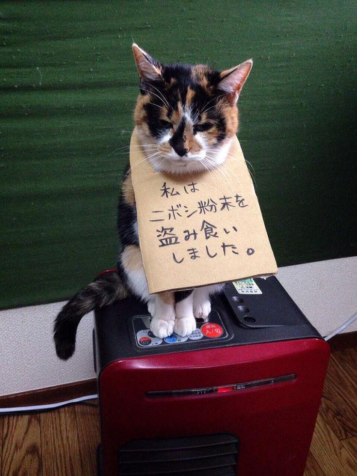 """uinyan: """"3104丁目の幽霊さんはTwitterを使っています: """"http://t.co/e1GYaijgMt"""" """""""