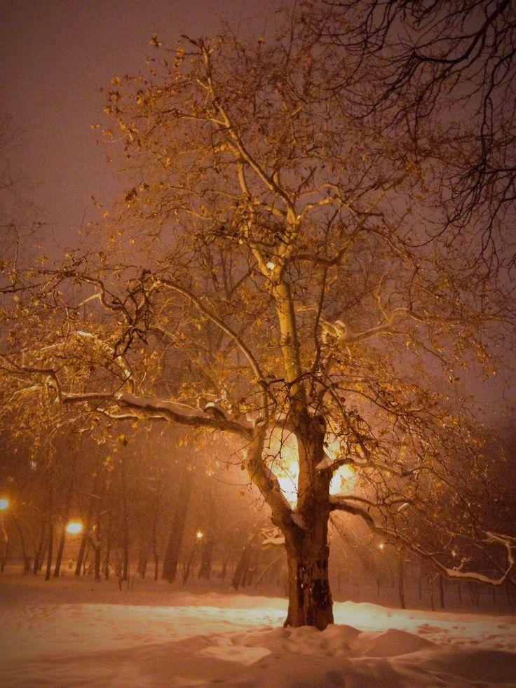Bucharest// Cismigiu// winter
